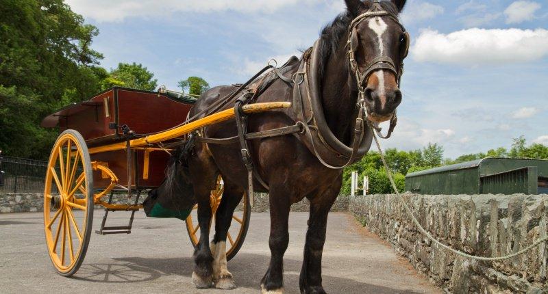 Horse-and-Cart-Shutterstock-www.shutterstock.com_-800x430