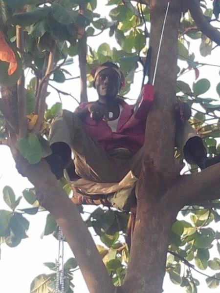 Man-Climbs-Tree